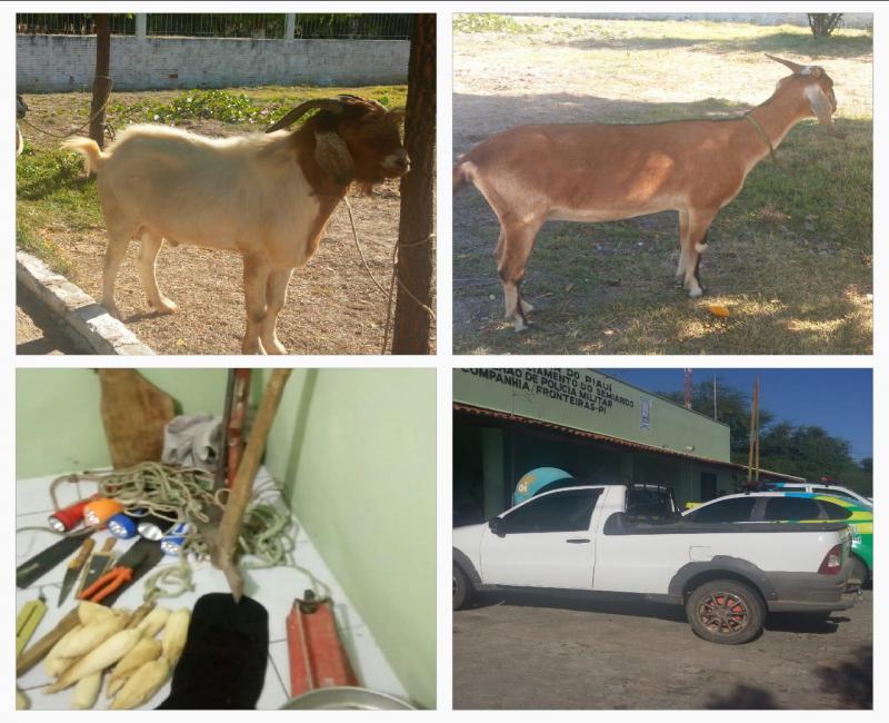 Quadrilha é presa por furtar mais de 300 animais no Piauí