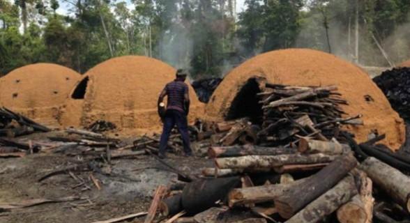 Piauí tem seis nomes em 'lista suja' por escravizar trabalhadores