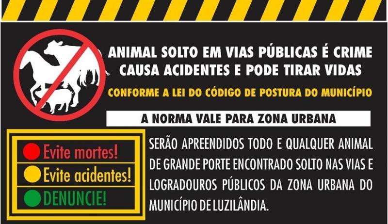 Governo de Luzilândia lança campanha de combate à soltura de animais no perímetro urbano
