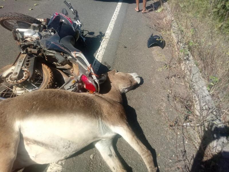 Motociclista sofre acidente após colidir com animal na PI 113, entre José de Freitas e Cabeceiras