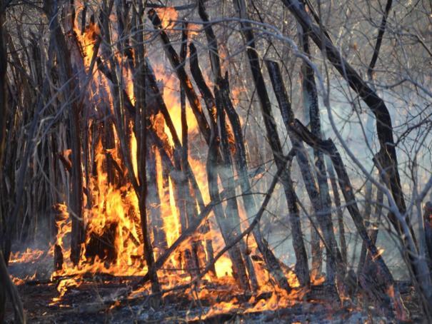 Prefeitura do Piauí decreta emergência após queimadas na zona rural
