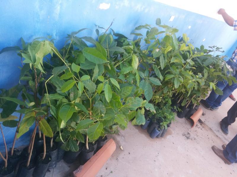 São Gonçalo do Gurguéia recebeu mudas de plantas para arborizar a cidade