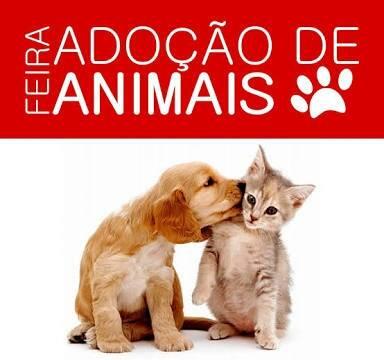 Feira de adoção de cães e gatos acontecerá neste sábado em Teresina