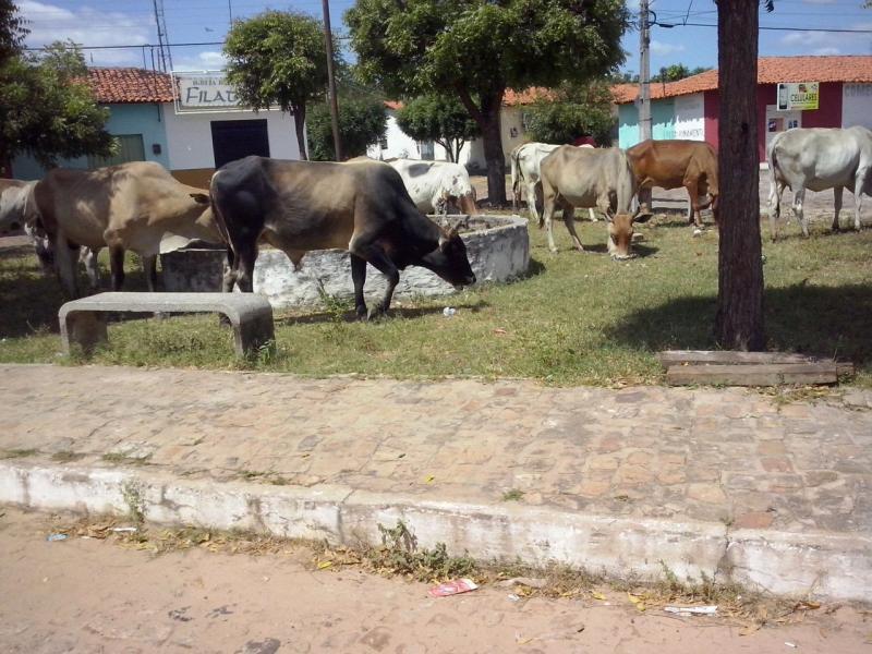 Animais soltos nas ruas de Cabeceiras serão recolhidos após a implantação da correição