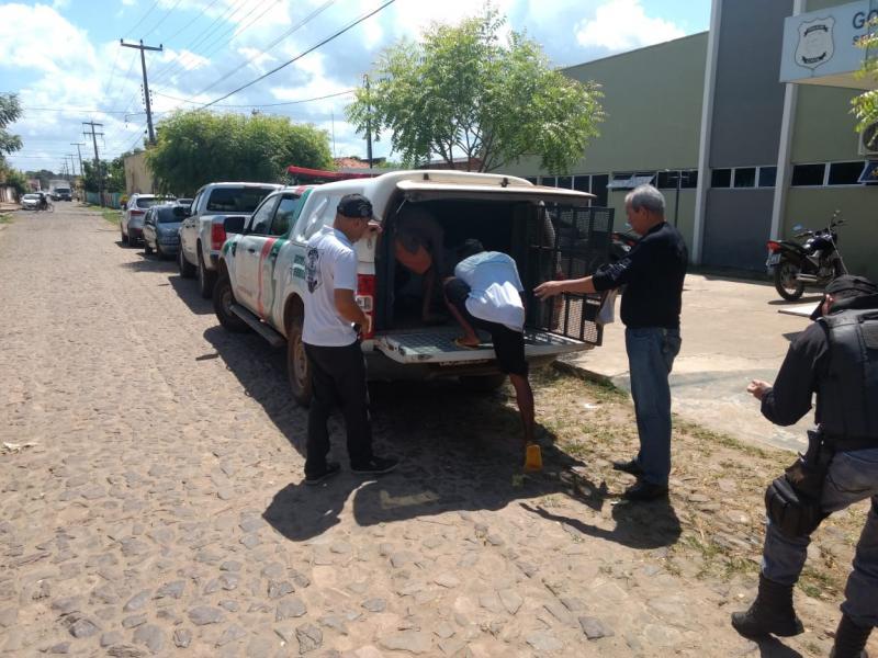 Polícia Civil de Piripiri prende mais um assaltante e realiza transferências de presos