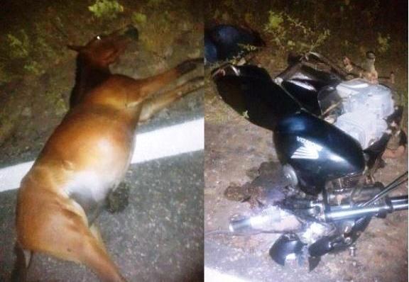 Mulher morre após colidir moto em animal na PI-116