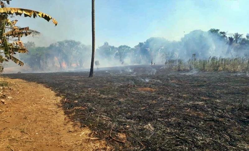 Incêndio destrói canavial da Cachaça Lira no município de Amarante