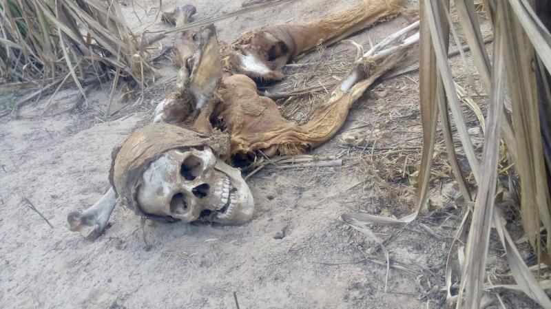 Ossadas humanas são encontradas em rodovia no Piauí