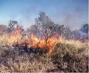 Instituto realizará palestra sobre queimadas