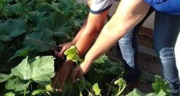 AMARANTE : Profissionais de escola municipal implantam o projeto de horta