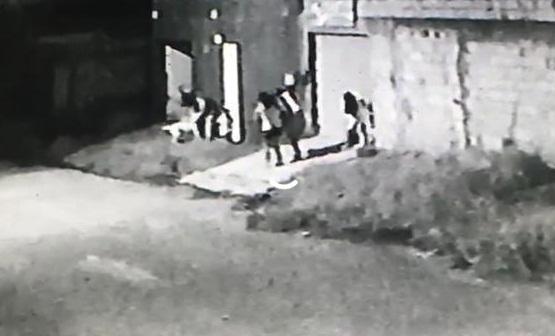Vídeo mostra pit bull atacando criança de 3 anos; imagens fortes