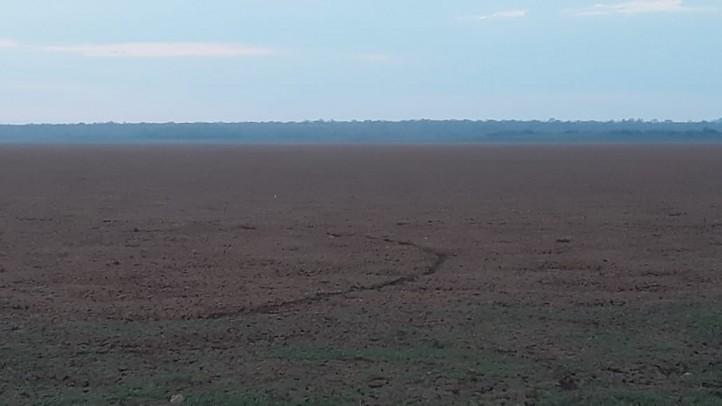 Lagoa no Piauí seca e deixa milhares de peixes mortos