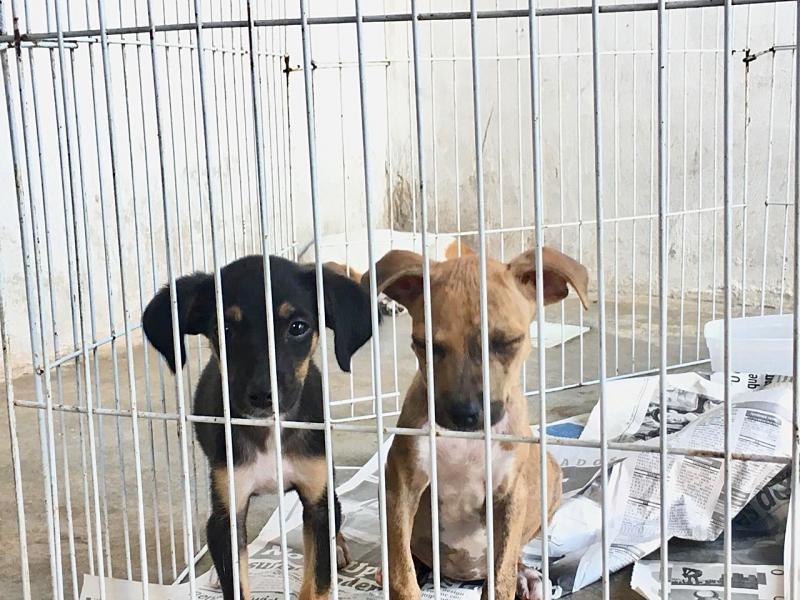 Campanha arrecada ração para animais em Teresina