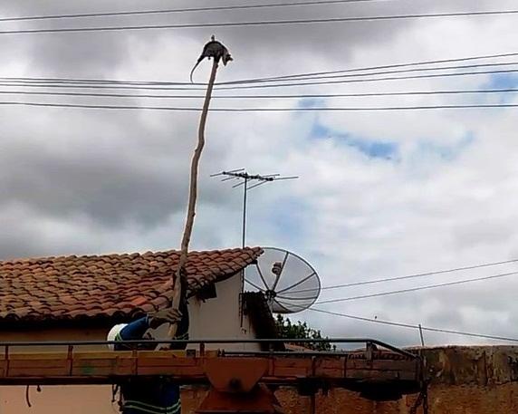 Eletrobrás é acionada para Retirar Mucura da Rede Elétrica em Esperantina