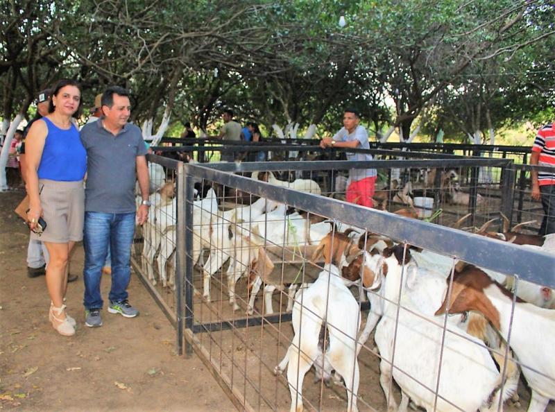 Prefeitura de Joaquim Pires realiza XI Expofeira de Caprinos e Ovinos