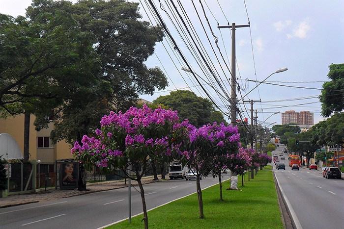 Senado aprova financiamento para arborização e recuperação de áreas