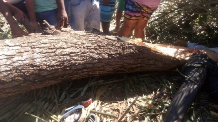Homem morre após ser atingido por galho de árvore em União