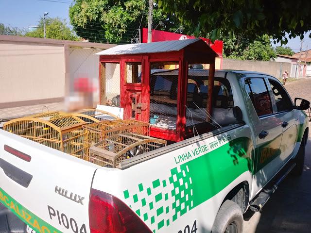 Aves silvestres são apreendidas no município de Cocal