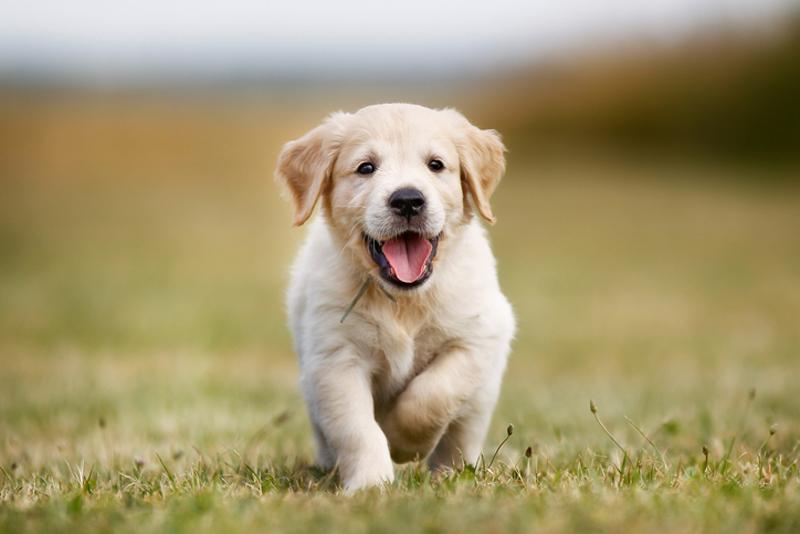Vigilância Sanitária de Colônia realizará testes de calazar em cães
