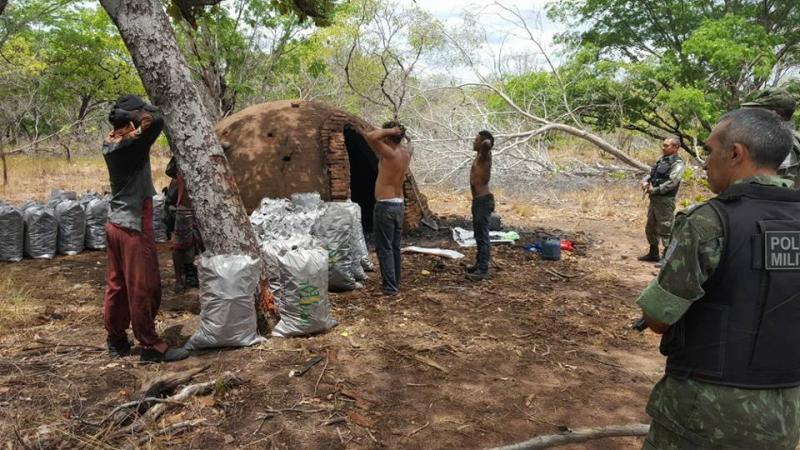 Fiscalização destrói fornos clandestinos de carvão em Regeneração