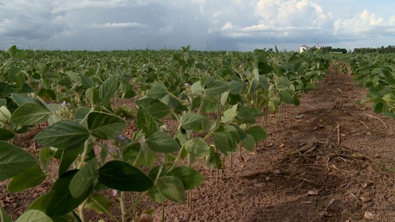IBGE aponta safra recorde este ano no Piauí com crescimento de 177% na colheita