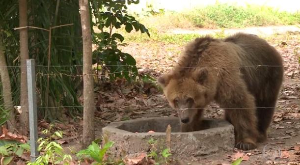 Polêmica sobre transferência da ursa Marsha é destaque no Fantástico