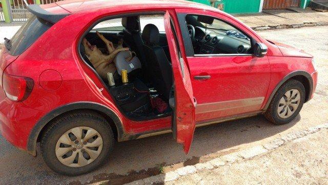 Motorista alcoolizado é preso transportando porco em cadeirinha de bebê