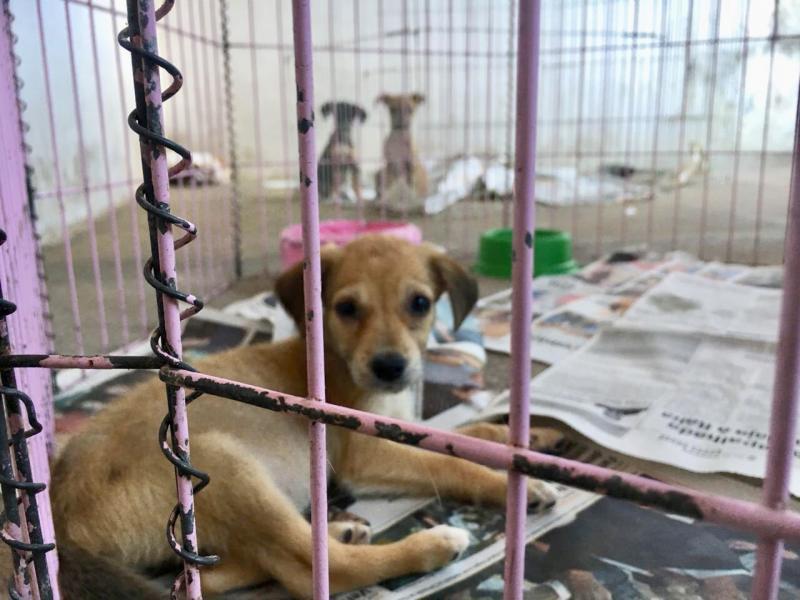 Câmara aumenta pena de maus-tratos contra animais