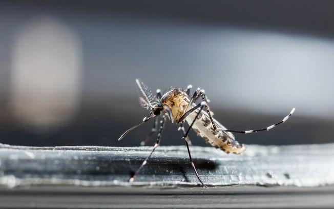 Piauí tem 37 municípios em alerta para dengue, zika e chikungunya