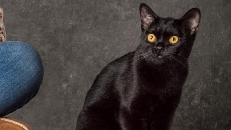 Gato Léon vira homem, dá surra em Sampaio e tem rosto revelado