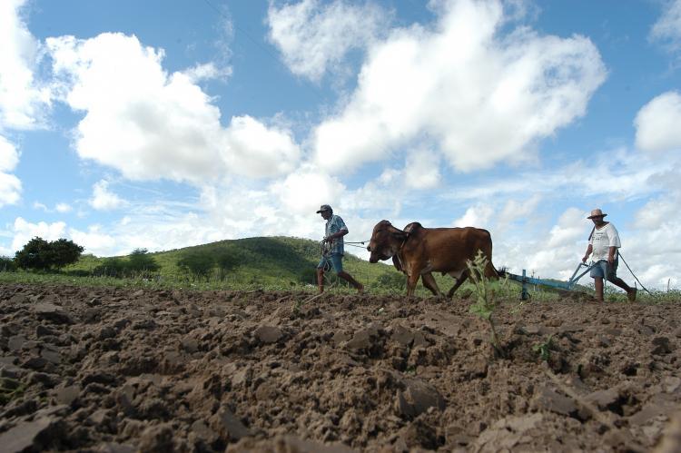 Garantia-Safra: agricultores receberão o recurso a partir de dezembro