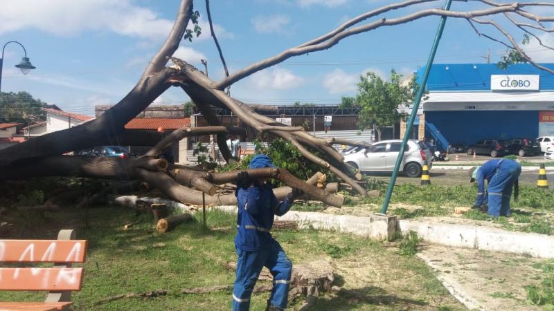 SDU retira árvores e detecta risco de desabamento em residencial