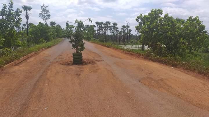 Em protesto inusitado, populares 'plantam' árvore no meio da PI 114