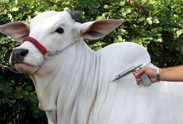 Adapi adia prazos e alerta para necessidade de certificação da vacinação