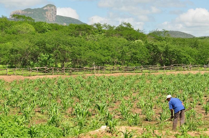 Garantia-Safra: agricultores familiares receberão o recurso em janeiro