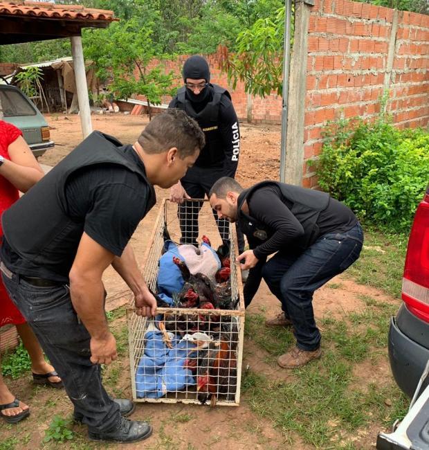 Polícia Civil apreende galos em rinha durante operação em Teresina