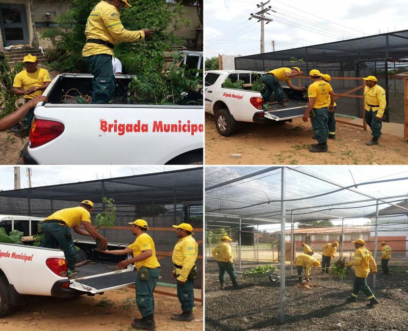 Brigadistas recolhem mudas, para Viveiro Municipal de Uruçuí