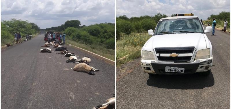 Veículo em alta velocidade atropela e mata rebanho de ovelhas em PI