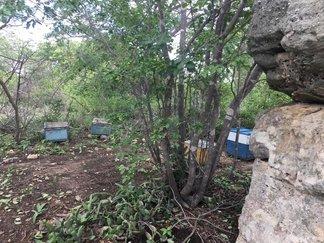 Adapi se reúne para discutir resultados sobre morte de abelhas
