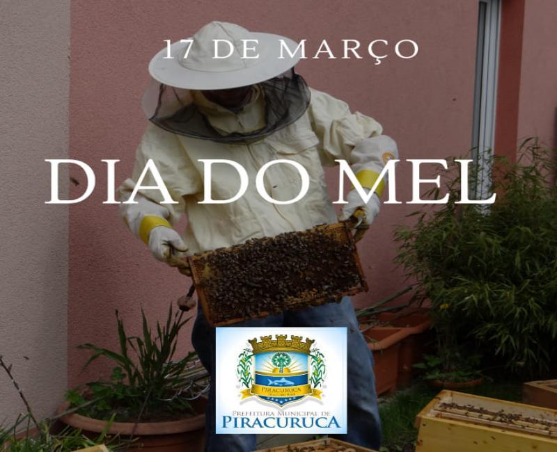 Conheça o potencial do mel de Piracuruca
