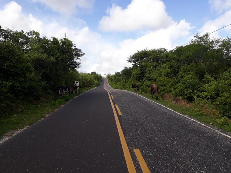 Animal solto causa mais um acidente na zona rural de Buriti dos Lopes
