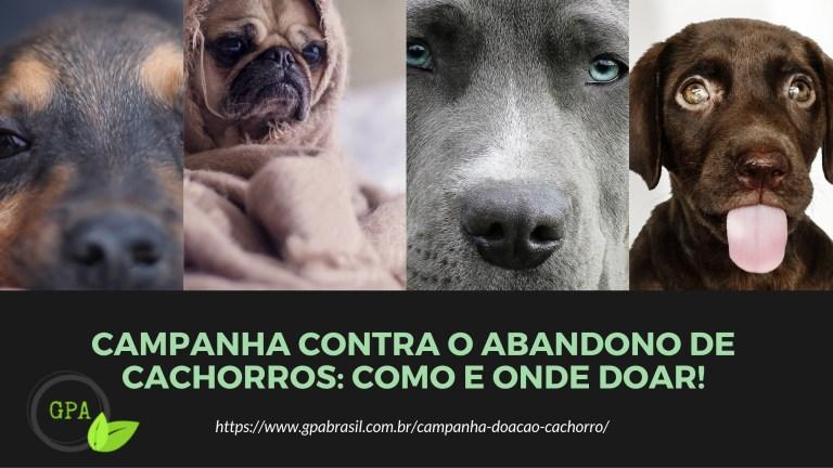 Grupo cria campanha contra o abandono de cachorros