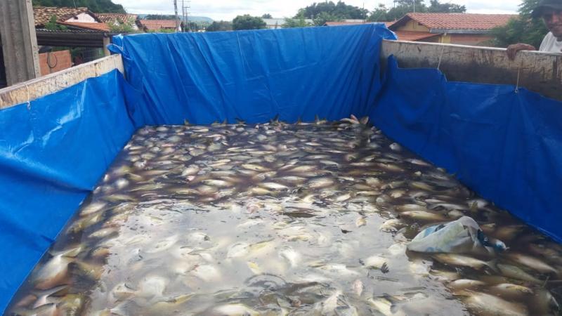 Prefeitura de Lagoinha do Piauí realiza tradicional distribuição de peixes