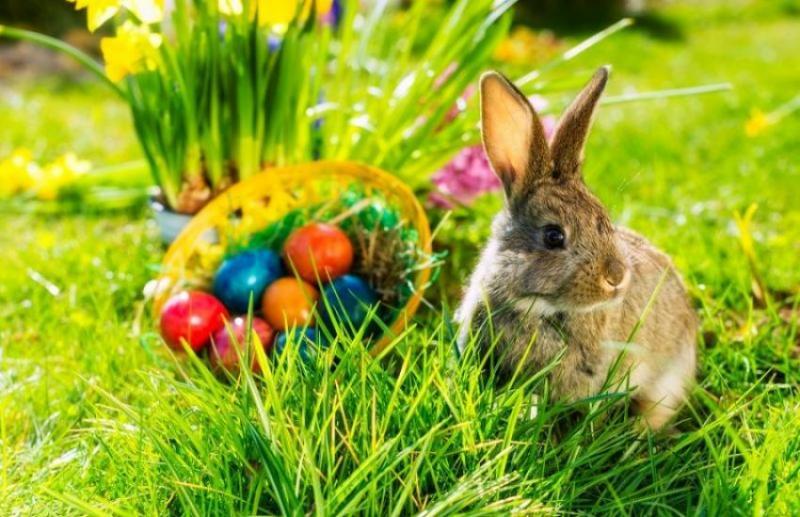 Qual a relação do ovo e o coelho, com Jesus Cristo?