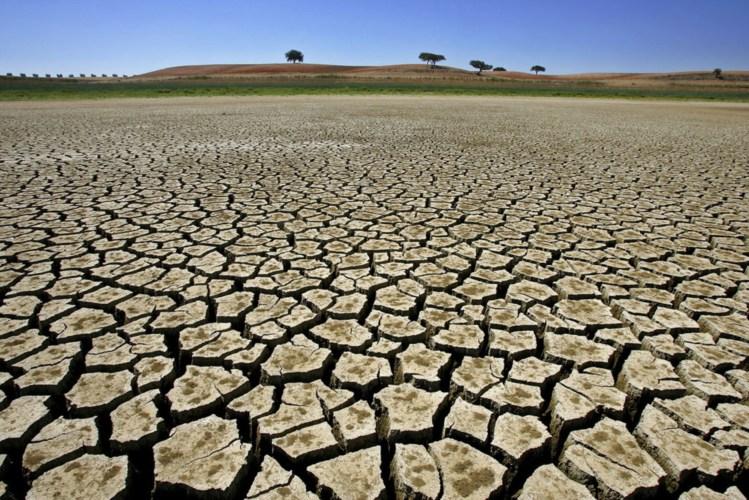 Metade dos municípios decretou emergência em virtude da seca