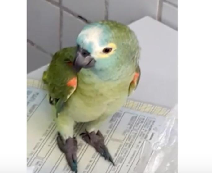 Imprensa nacional repercute apreensão de papagaio delator no PI