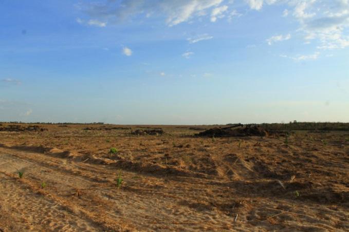 CONVAP é multada por destruir 453 hectares de área de preservação no Piauí