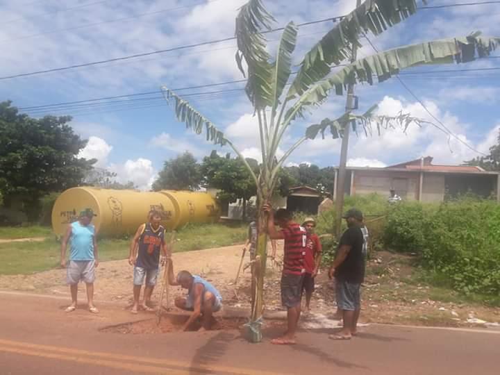 Moradores plantam pé de banana em avenida de Batalha