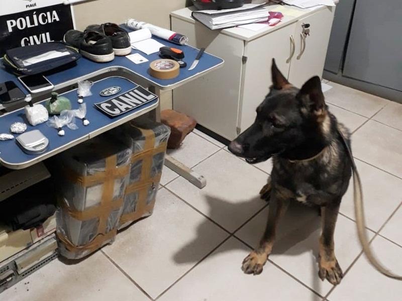 Cão farejador ajuda polícia a encontrar drogas em Picos
