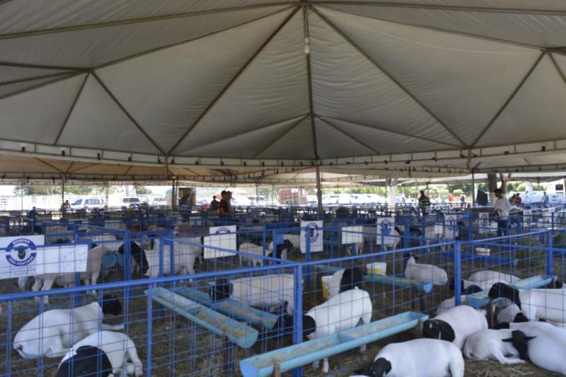 Exposição de ovinos e caprinos de raça reúne criadores de seis estados